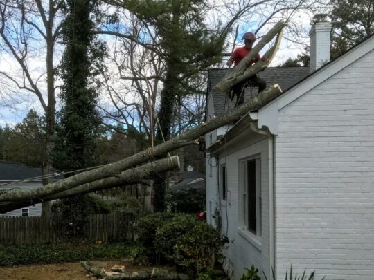 Emergency Tree Removal-Palm Springs Tree Trimming and Tree Removal Services-We Offer Tree Trimming Services, Tree Removal, Tree Pruning, Tree Cutting, Residential and Commercial Tree Trimming Services, Storm Damage, Emergency Tree Removal, Land Clearing, Tree Companies, Tree Care Service, Stump Grinding, and we're the Best Tree Trimming Company Near You Guaranteed!