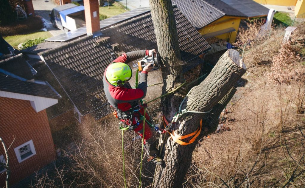 Palm Springs Tree Trimming and Tree Removal Services Header-We Offer Tree Trimming Services, Tree Removal, Tree Pruning, Tree Cutting, Residential and Commercial Tree Trimming Services, Storm Damage, Emergency Tree Removal, Land Clearing, Tree Companies, Tree Care Service, Stump Grinding, and we're the Best Tree Trimming Company Near You Guaranteed!