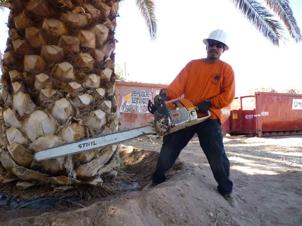 Palm Tree Trimming & Palm Tree Removal-Palm Springs Tree Trimming and Tree Removal Services-We Offer Tree Trimming Services, Tree Removal, Tree Pruning, Tree Cutting, Residential and Commercial Tree Trimming Services, Storm Damage, Emergency Tree Removal, Land Clearing, Tree Companies, Tree Care Service, Stump Grinding, and we're the Best Tree Trimming Company Near You Guaranteed!