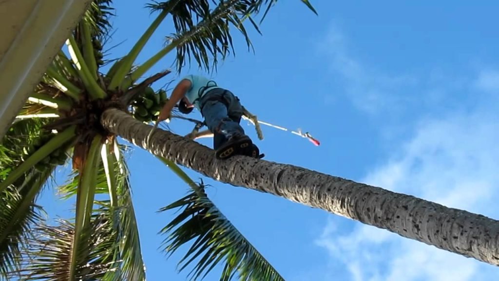 Palm Tree Trimming-Palm Springs Tree Trimming and Tree Removal Services-We Offer Tree Trimming Services, Tree Removal, Tree Pruning, Tree Cutting, Residential and Commercial Tree Trimming Services, Storm Damage, Emergency Tree Removal, Land Clearing, Tree Companies, Tree Care Service, Stump Grinding, and we're the Best Tree Trimming Company Near You Guaranteed!