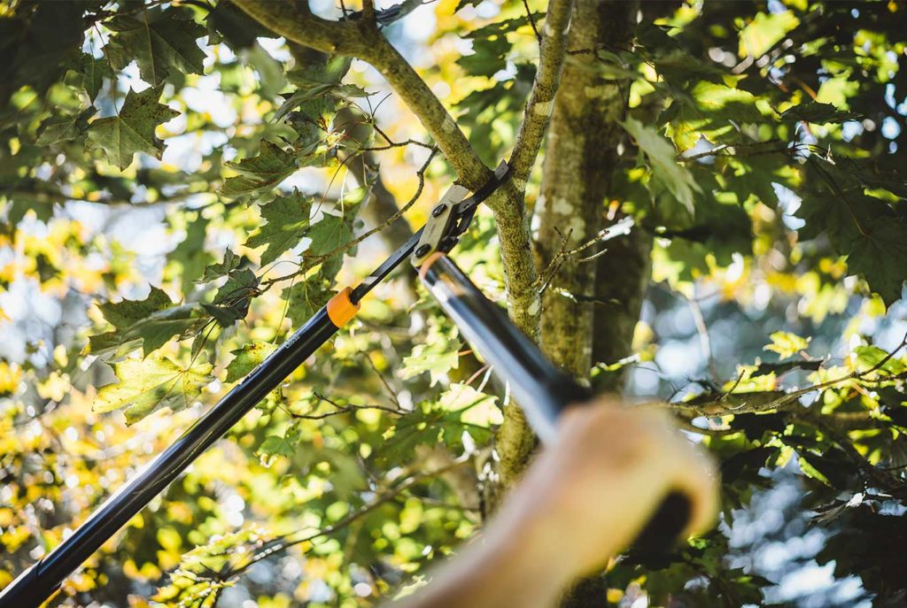 Tree Pruning & Tree Removal-Palm Springs Tree Trimming and Tree Removal Services-We Offer Tree Trimming Services, Tree Removal, Tree Pruning, Tree Cutting, Residential and Commercial Tree Trimming Services, Storm Damage, Emergency Tree Removal, Land Clearing, Tree Companies, Tree Care Service, Stump Grinding, and we're the Best Tree Trimming Company Near You Guaranteed!