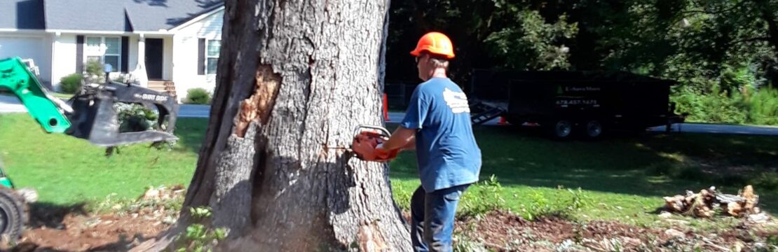 Tree Removal-Palm Springs Tree Trimming and Tree Removal Services-We Offer Tree Trimming Services, Tree Removal, Tree Pruning, Tree Cutting, Residential and Commercial Tree Trimming Services, Storm Damage, Emergency Tree Removal, Land Clearing, Tree Companies, Tree Care Service, Stump Grinding, and we're the Best Tree Trimming Company Near You Guaranteed!