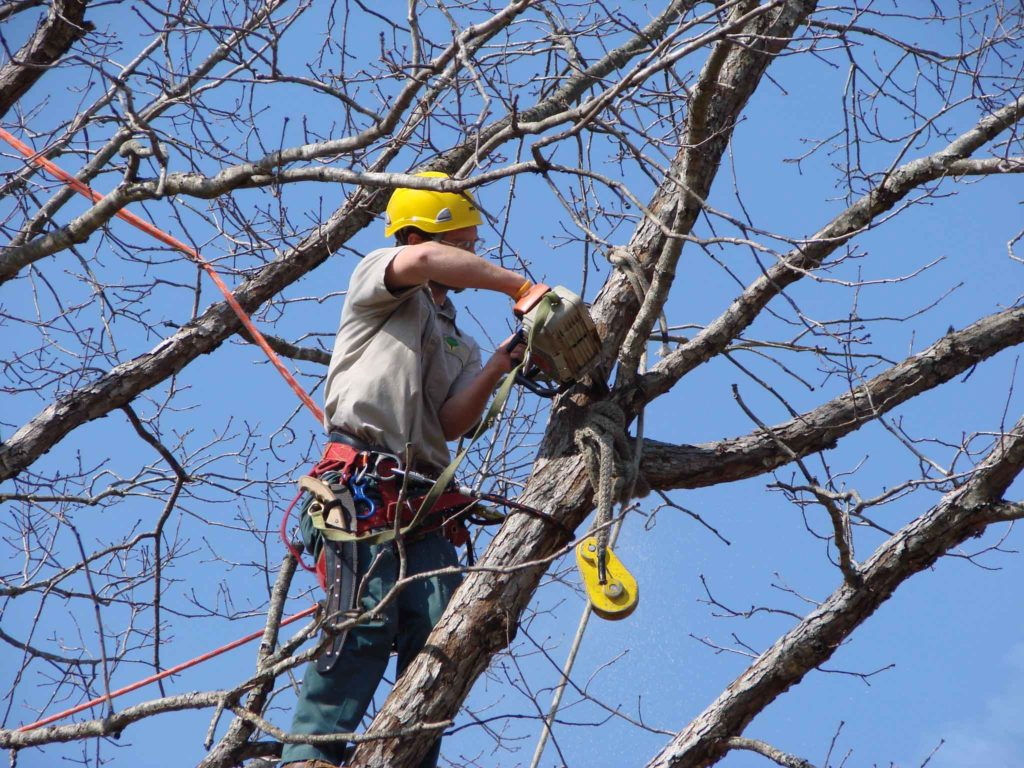 Tree Trimming-Palm Springs Tree Trimming and Tree Removal Services-We Offer Tree Trimming Services, Tree Removal, Tree Pruning, Tree Cutting, Residential and Commercial Tree Trimming Services, Storm Damage, Emergency Tree Removal, Land Clearing, Tree Companies, Tree Care Service, Stump Grinding, and we're the Best Tree Trimming Company Near You Guaranteed!