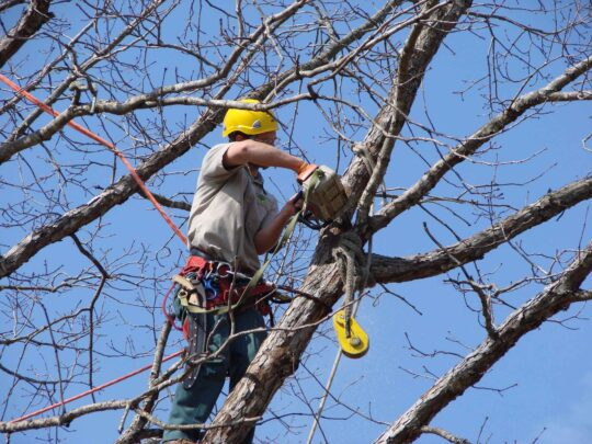 Tree Trimming Services-Palm Springs Tree Trimming and Tree Removal Services-We Offer Tree Trimming Services, Tree Removal, Tree Pruning, Tree Cutting, Residential and Commercial Tree Trimming Services, Storm Damage, Emergency Tree Removal, Land Clearing, Tree Companies, Tree Care Service, Stump Grinding, and we're the Best Tree Trimming Company Near You Guaranteed!